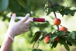 Продукты, содержащие ГМО: правда и вымысел