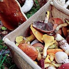 Как правильно хранить грибы в домашних условиях