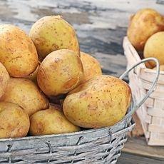 Как выбирать и хранить картофель