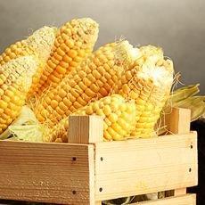 Как правильно хранить кукурузу в домашних условиях